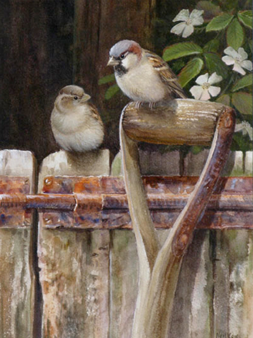 'The Old Tool Shed' -  Sparrows 28 x 20 cm