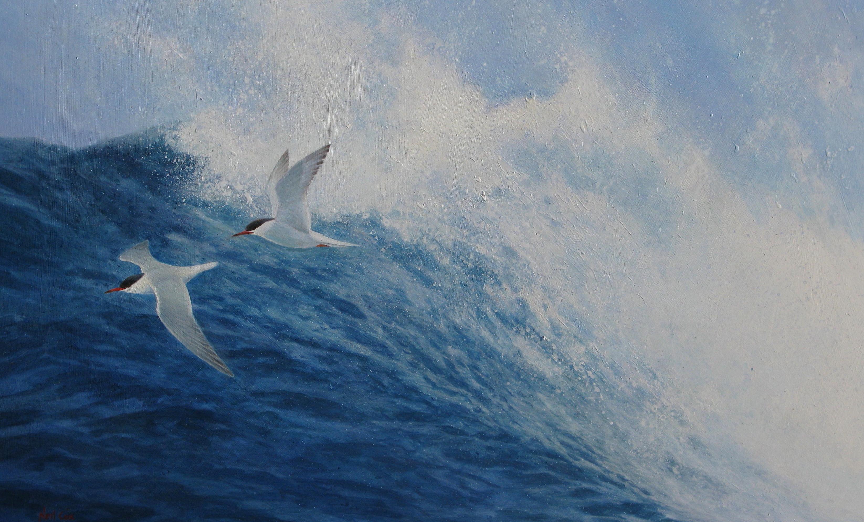 Breakers, Common Terns