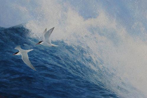 'Breakers' - Common Terns 43 x 63 cm