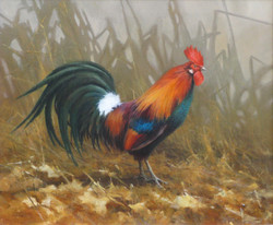 Jungle Fowl Rooster