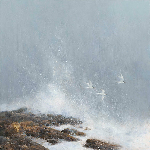 'Into the Wind' -  Common Terns 40 x 40cm