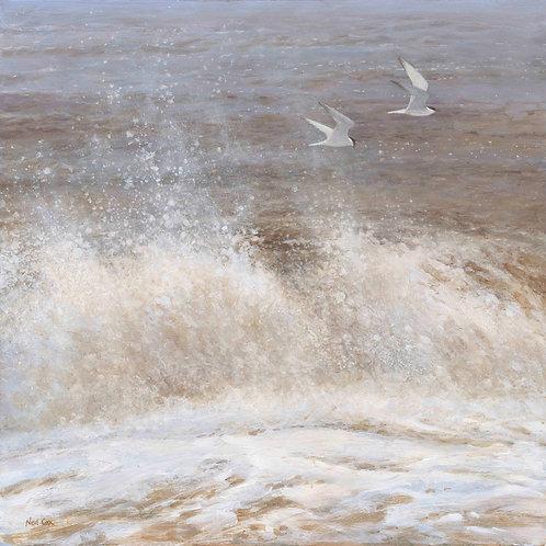 'Wet and Wild' -  Common Terns 45 x 45 cm