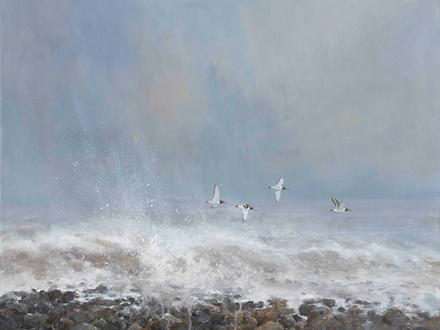 'February Storms' -  Oyster Catchers 35 x 43 cm