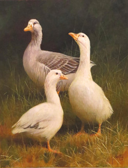 The Three Graces,  Geese