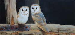 Up in the Rafters Barn Owls