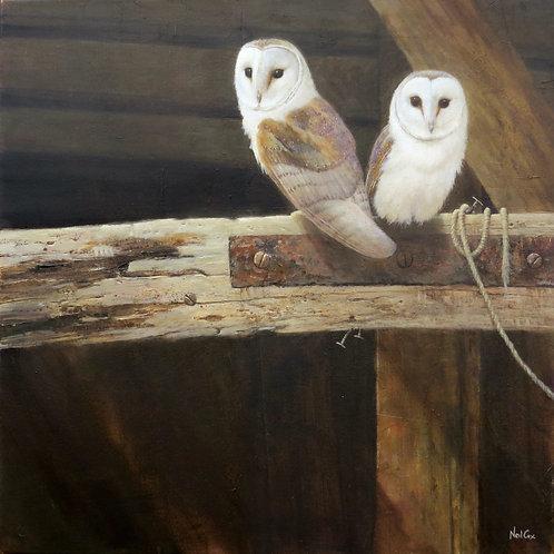 'The Old Cider Barn' Barn Owls 45 x 45cm