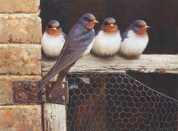 The Old Stables, Swallows