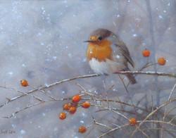Snow Flurry, Robin