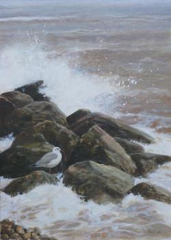 Stormy Waters, Backheaded Gull
