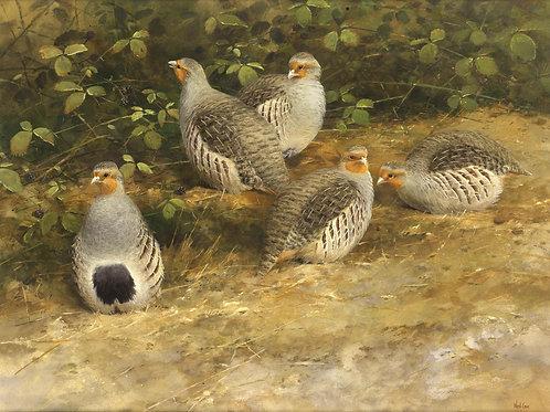 Grey Partridges 45 x 65cm