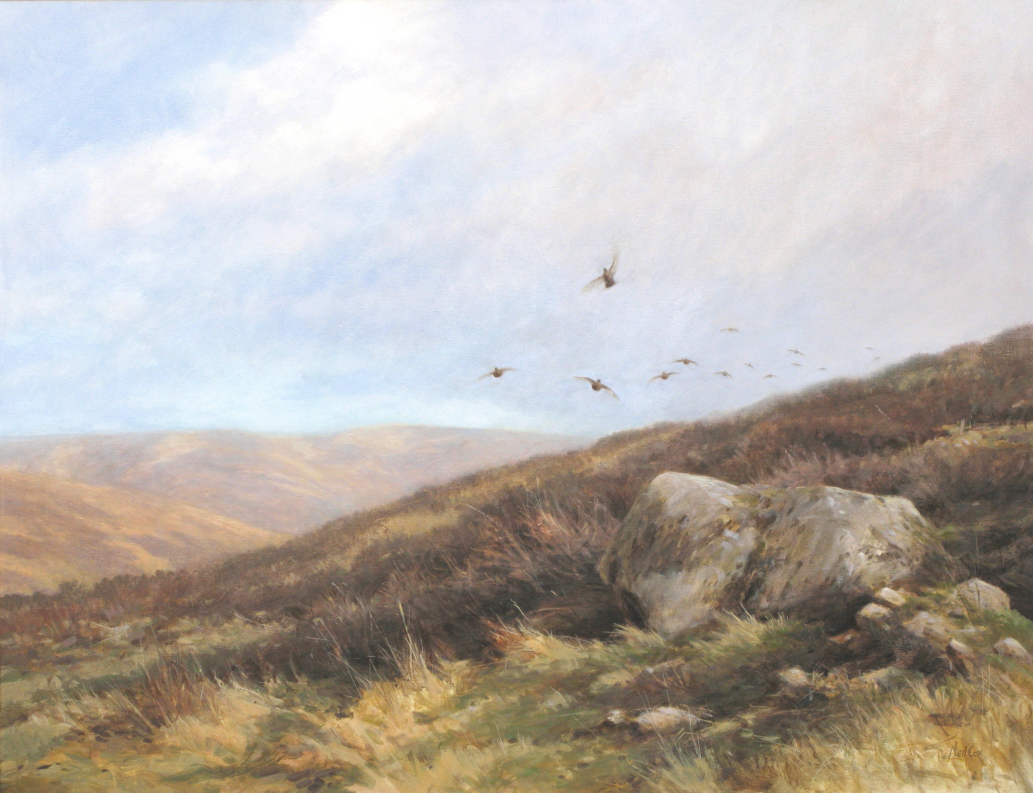 Over the Brow - Red Grouse