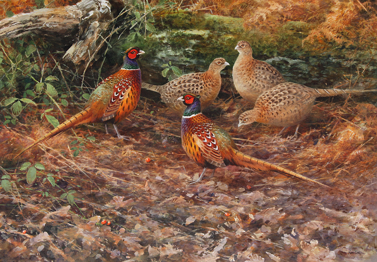 The Gathering, Pheasants