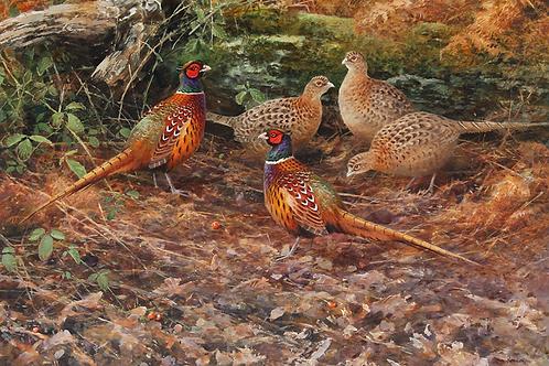 'The Gathering' -  Pheasants 45 x 65cm