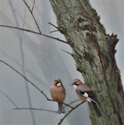 Winter Willows - Jays
