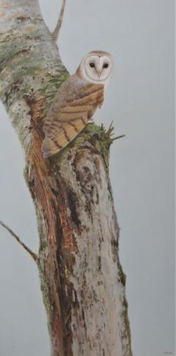 The Broken Oak - Barn owl