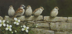 NEW: Sparrows On Wall With Clematis