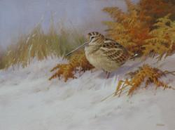 Winter Woodcock