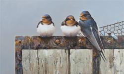 Autumn_approaches-_Swallows