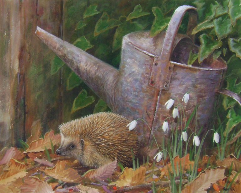Bottom of the Garden, Hedgehog