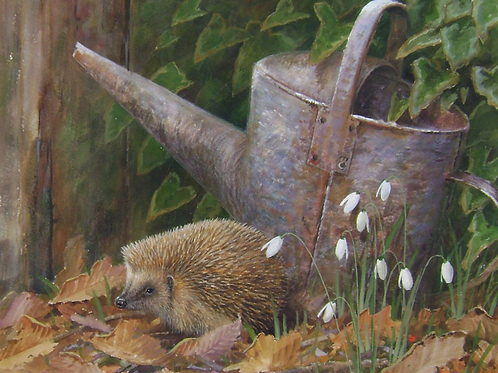'Bottom of the Garden' -  Hedgehog 23 x 28cm