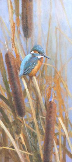 Kingfisher and Bullrushes