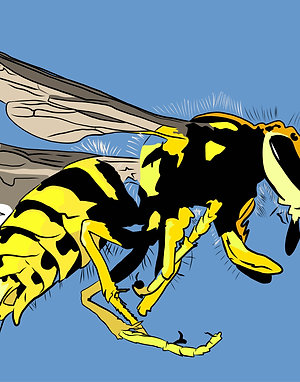 Bee yourself - it is a wasp