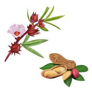 Hibiscus Peanuts