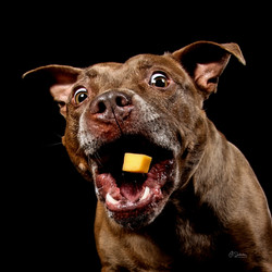 Carrie Southerton Dog Photography 3