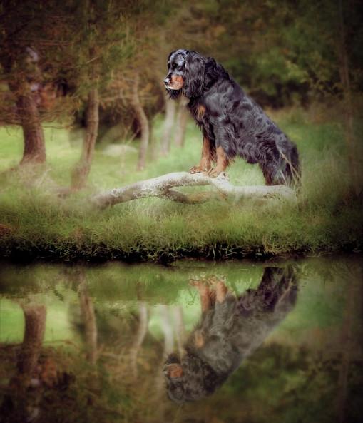 Top Dog Photographer Scotland Pet Photographer near me.jpg