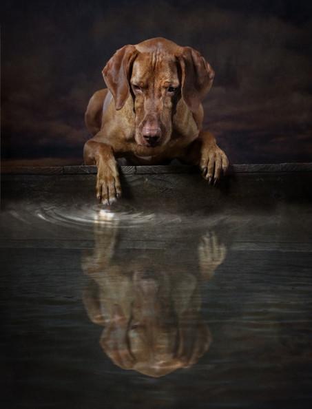 Dog Photography Carrie Southerton Dog Photography near me.jpg