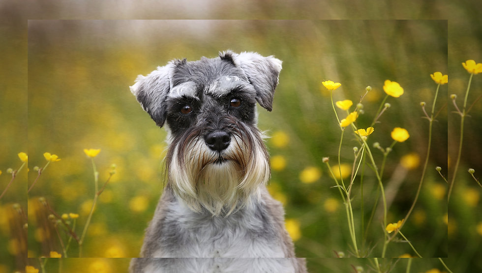 Carrie Southerton Dog Photography 20.jpg