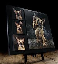 Pet photographer Falkirk Dog Photography