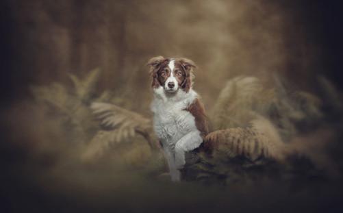 Dog photographer pet photography falkirk