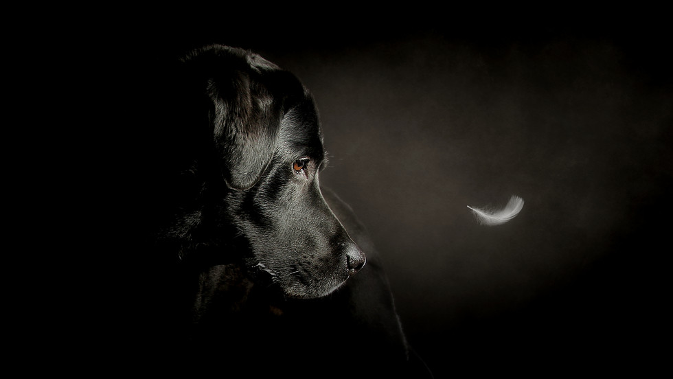 Dog Photography pet photographer scotland falkirk