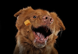 Carrie Southerton Dog Photography 4