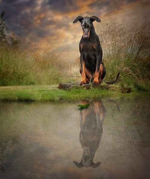 Pet photography edinburgh falkirk.jpg