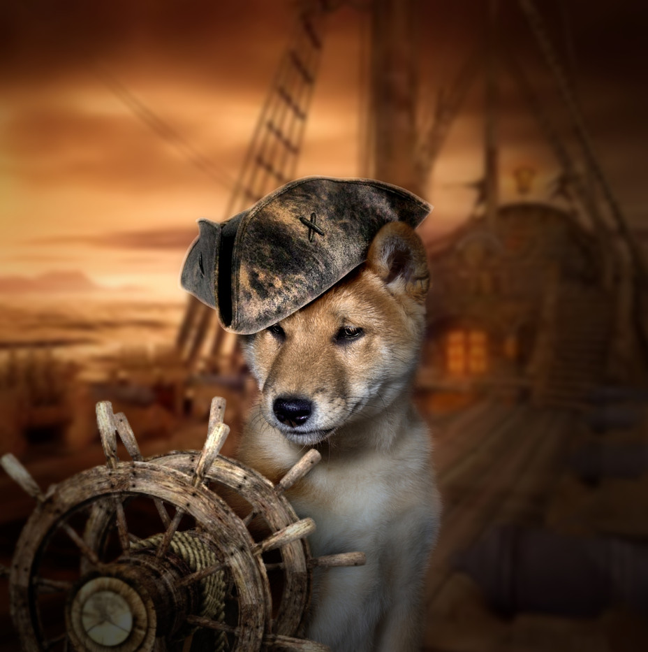 DOGS in HATS by Carrie Southerton Dog Photography