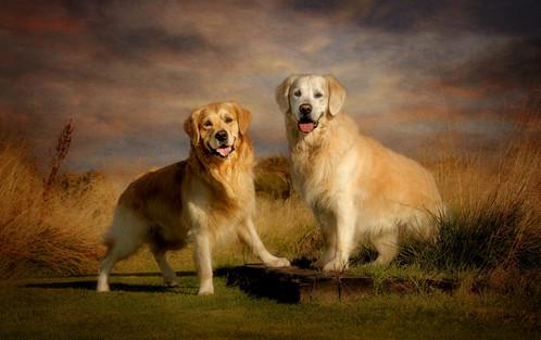 Carrie Southerton Dog Photography pet photographer artist falkirk near me