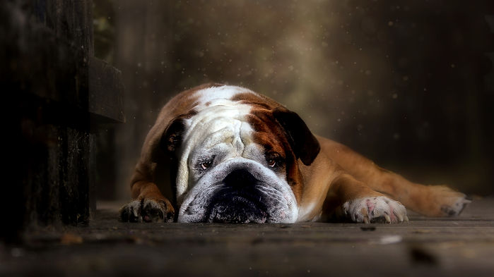 Carrie Southerton Dog Photography 48.jpg