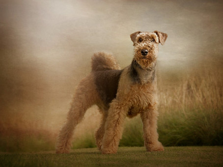 All About Carrie Southerton Dog Photography