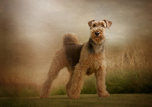 Pet photography Falkirk Dog photographer near me