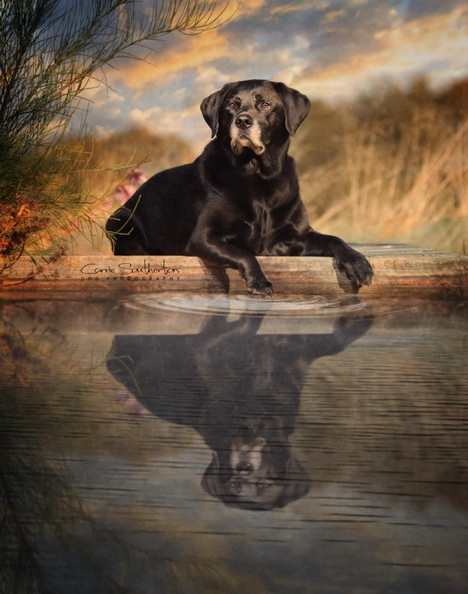 dog photographer near me falkirk edinburgh scotland.jpg