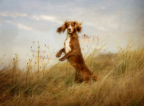 dog photographer falkirk pet photography scotland