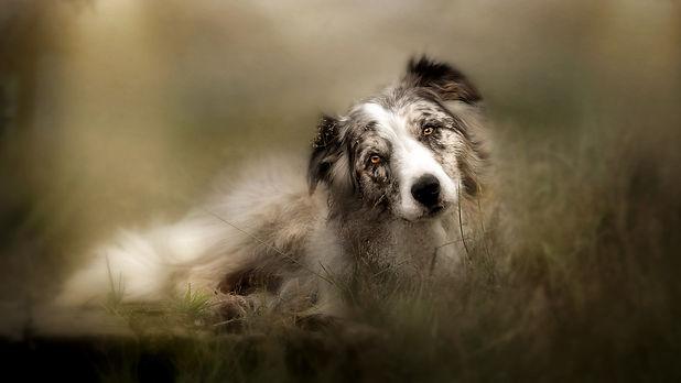 Pet photographer near me Scotland Dog Photography