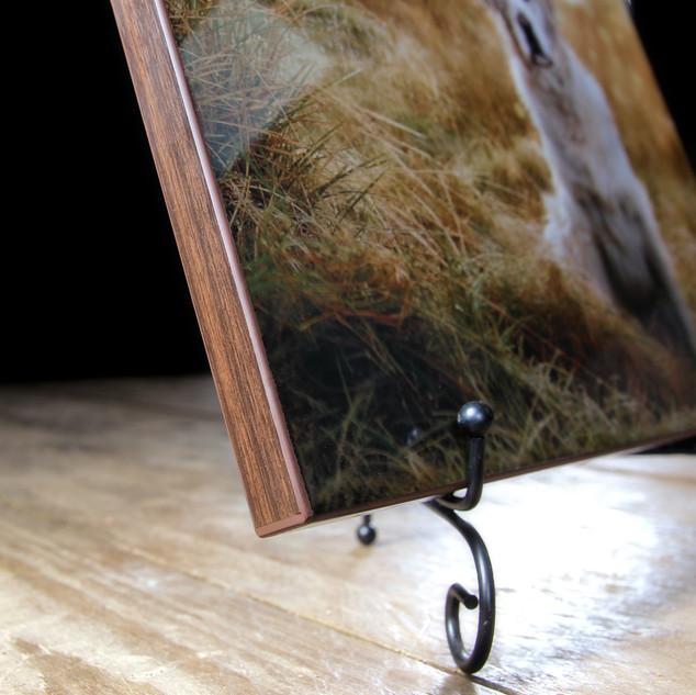 The Edge - The Scottish Dog Photographer