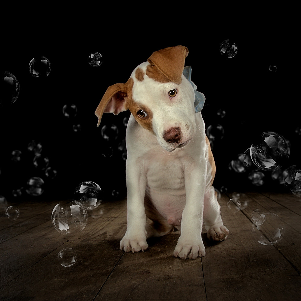 Cute puppy with Bubbles pet photographer falkirk