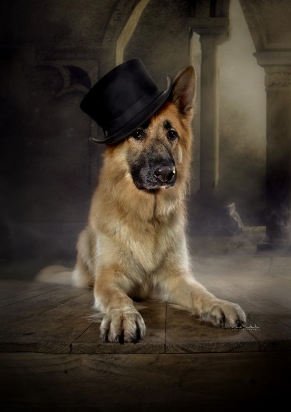 DOGS in HATS by Carrie Southerton Dog Ph