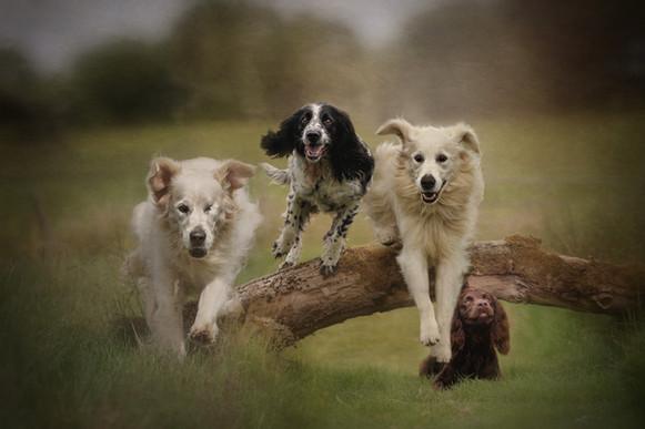 Carrie Southerton Dog Photography pet photography scotland near me