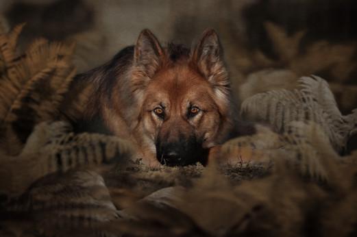 Dog Photography near me Falkirk Edinburgh Scotland Pet