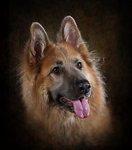 Dog Photography Pet Photographer near me